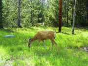 Elk Mixed Media - Deer - Yellowstone National Park by Photography Moments - Sandi