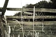 Split Rail Fence Prints - Defensive Position Print by Janelle Oliver