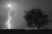 Electric Photo Originals - Defiant Tree by Diana Hughes
