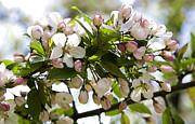 Defining Spring 3 Print by Joanna Madloch