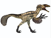 Deinonychus Prints - Deinonychus on White Print by Corey Ford