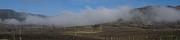 Mick Anderson - Del Rio Vineyards Panoramic