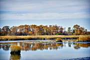Creat Prints - Delaware Bay Print by Elaine Walsh