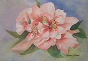 Linda L Stinson - Delicate Beauty