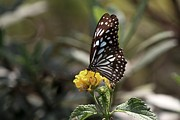 Ramabhadran Thirupattur - Delicate Darling