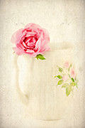 China Rose Framed Prints - Delicate Framed Print by Darren Fisher