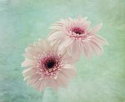 Kim Hojnacki - Delicate Pinks
