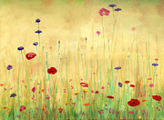 Original Oil Painting Prints - Delicate Poppies Print by Cecilia  Brendel