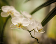 Depth Of Field Photos - Delicate Romance Lace by Mike Reid