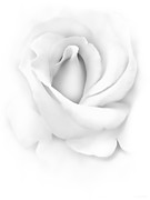 Rose Closeup Posters - Delicate Rose Flower Monochrome Poster by Jennie Marie Schell