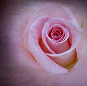 Delicately Pink Print by Ivelina  Aasen