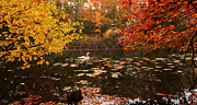 Autumn Art Prints - Delightful Autumn Print by Lourry Legarde