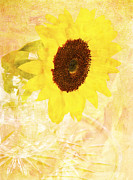 Daphne Sampson - Delightful Sunflower