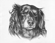 Puppies Drawings Framed Prints - Delphine - Dachshund Framed Print by Heather Page