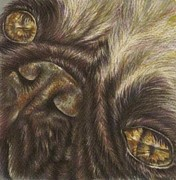 Featured Drawings Prints - Demille the Pug Print by Lisa Marie Szkolnik