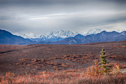 Denali National Park Prints - Denali Landscape Print by Lauri Novak