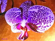 Photographs With Red. Prints - Dendrobium Orchid II Print by Buzz  Coe