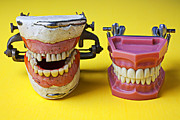 Yellow Background Posters - Dental models Poster by Garry Gay