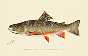 Antique Posters - Denton Brook Trout Poster by Gary Grayson