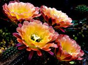 Desert Apricot Glow 6 Print by Julie Palencia