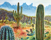 Saguaro Framed Prints - Desert Beauty Framed Print by Frank Robert Dixon