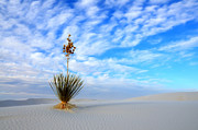 Bob Christopher Travel Photographer Posters - Desert Beauty White Sands New Mexico Poster by Bob Christopher