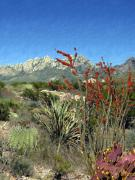 Las Cruces New Mexico Framed Prints - Desert Bloom Framed Print by Kurt Van Wagner