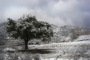 Burr Photos - Desert Cold Tree by Dave Dilli