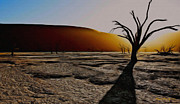 Desert Digital Art - Desert Floor by Wayne Bonney