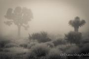 Desert Fog Print by Diana Shay Diehl