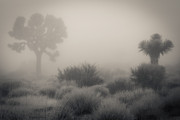 Diana Shay Diehl - Desert Fog / no watermark