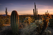 Southwest Landscape Metal Prints - Desert Golden Hour  Metal Print by Saija  Lehtonen