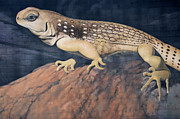 Mural Photo Posters - Desert Iguana Mural Poster by Bob Christopher