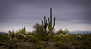 The Superstitions Photos - Desert Mist  by Saija  Lehtonen
