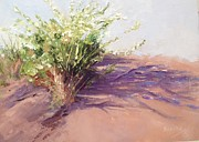 Grande Paintings - Desert Plants in Bloom I by Carol Hopper