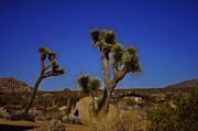 Cindy Nunn - Desert Retreat 4