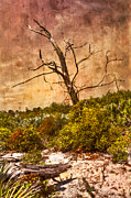 Dickenson Prints - Desert Rose Print by Debra and Dave Vanderlaan