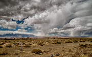 Rain Photos - Desert Showers by Cat Connor