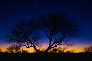 Lone Tree Metal Prints - Desert Silhouette Metal Print by Chad Dutson