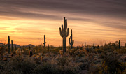 Southwest Landscape Metal Prints - Desert Southwest Sunset  Metal Print by Saija  Lehtonen