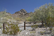 Split Rail Fence Prints - Desert Spring Print by Kevin McCarthy