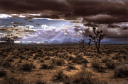 Jason Bates - Desert Storm