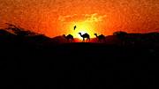 Liam Liberty - Desert Sunset - Silhouette Camels