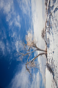 Crystals Art - desert tree in white sands smartphone Version by Ralf Kaiser