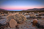 Pink Sky Framed Prints - Desert Twilight Framed Print by Peter Tellone