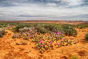 Juergen Klust - Desert View