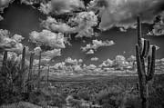 Desert Vista Print by Judi FitzPatrick