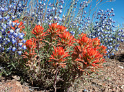 Washoe County Prints - Desert Wildflowers Print by Kathleen Bishop