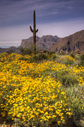 The Superstitions Prints - Desert Wildflowers  Print by Saija  Lehtonen