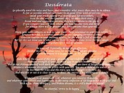 Essential Digital Art Posters - Desiderata with Cherry Tree at Sunset Poster by Barbara Griffin